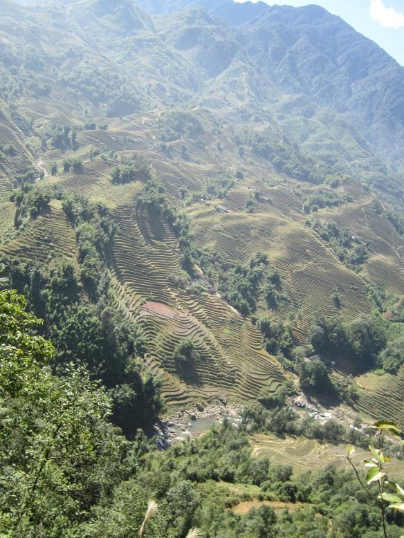 ricefields sapa